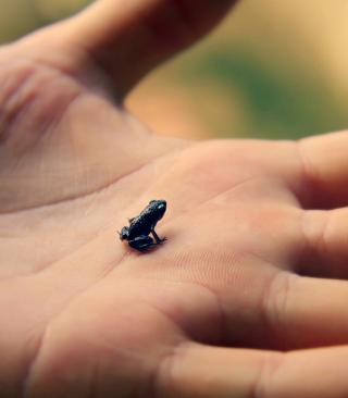 Little Black Frog - Obrázkek zdarma pro iPhone 6