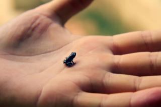 Little Black Frog - Obrázkek zdarma pro 1600x900