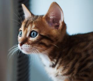 Ginger Kitten With Blue Eyes - Obrázkek zdarma pro 1024x1024