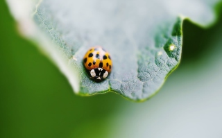 Orange Ladybug Background for Android, iPhone and iPad