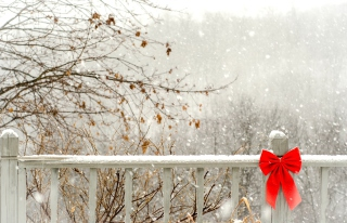 Red Bow On Fence Background for Android, iPhone and iPad