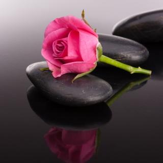 Pink rose and pebbles - Obrázkek zdarma pro iPad mini