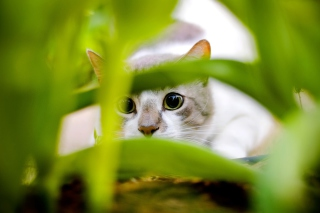 Cat In Grass Wallpaper for Android, iPhone and iPad