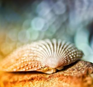 Seashell Macro - Obrázkek zdarma pro iPad mini