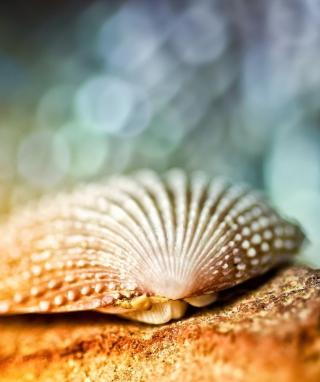 Seashell Macro - Obrázkek zdarma pro Nokia Asha 309