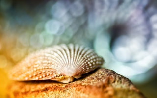 Seashell Macro Background for Android, iPhone and iPad