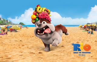 Luiz Bulldog in Rio - Obrázkek zdarma pro Sony Xperia Z2 Tablet
