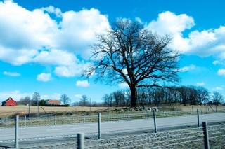 Обои Tree And Road на Android