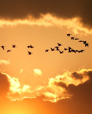 Golden Sky And Birds Fly - Obrázkek zdarma pro Nokia Lumia 505