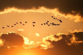 Golden Sky And Birds Fly - Obrázkek zdarma pro 1024x768