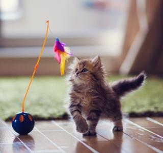 Kitten And Feather - Obrázkek zdarma pro 128x128