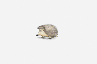 Hedgehog Illustration Background for Android, iPhone and iPad