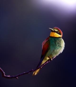 Golden Bee-Eater - Obrázkek zdarma pro iPhone 5C