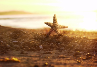 Sea Star On Beach Picture for Android, iPhone and iPad