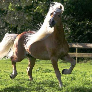 Horse - Obrázkek zdarma pro iPad 3