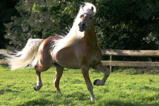Horse - Obrázkek zdarma pro HTC Wildfire