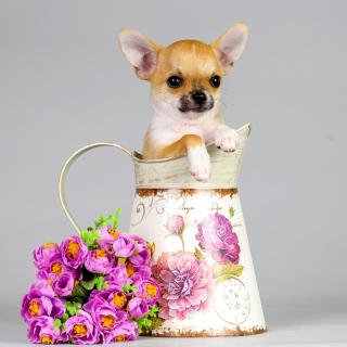 Chihuahua - Obrázkek zdarma pro 320x320