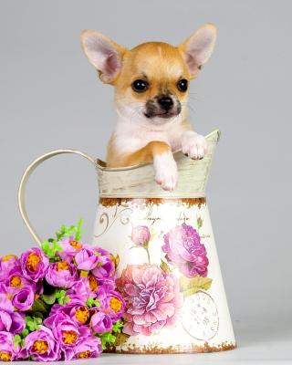 Chihuahua - Obrázkek zdarma pro Nokia Asha 502