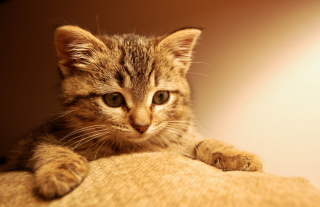 Nice Kitten Wallpaper for Android, iPhone and iPad