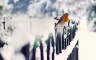 Обои Winter Bird для Android