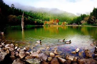 Picturesque Lake And Ducks - Obrázkek zdarma pro Desktop Netbook 1366x768 HD
