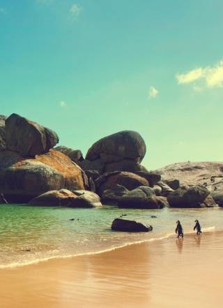 Penguins On Ocean Beach - Obrázkek zdarma pro Nokia X1-01