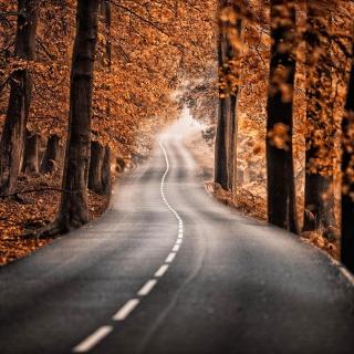 Road in Autumn Forest - Obrázkek zdarma pro 1024x1024