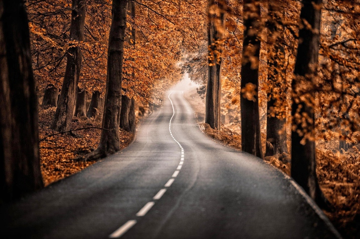 Road in Autumn Forest wallpaper