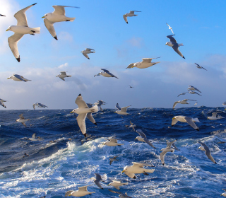 Wavy Sea And Seagulls - Obrázkek zdarma pro 208x208