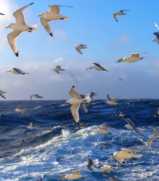 Wavy Sea And Seagulls - Obrázkek zdarma pro 128x160