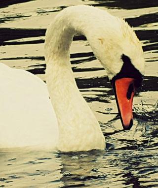 White Swan - Obrázkek zdarma pro Nokia 5233