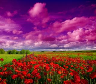 Poppies Field - Obrázkek zdarma pro iPad Air