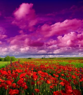 Poppies Field - Obrázkek zdarma pro 320x480