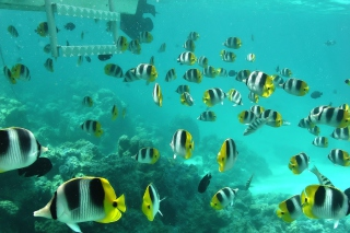 Free Ocean Fish Picture for Android, iPhone and iPad