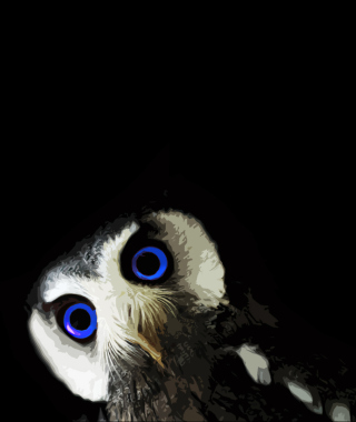 Funny Owl With Big Blue Eyes - Obrázkek zdarma pro iPhone 6 Plus