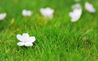 White Flower On Green Grass Background for Android, iPhone and iPad