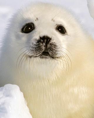 Baby Seal - Obrázkek zdarma pro 352x416