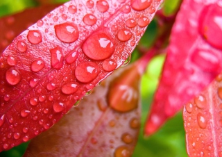Water Drops On Leaves Background for Android, iPhone and iPad