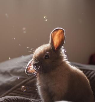 Funny Little Bunny - Obrázkek zdarma pro iPad