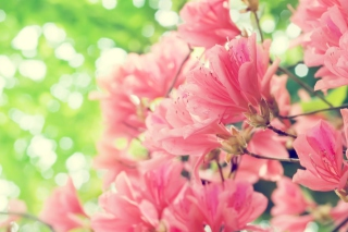 Amazing Pink Flowers Background for Android, iPhone and iPad
