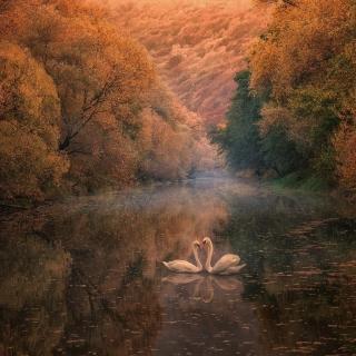 Swans on Autumn Lake - Obrázkek zdarma pro iPad