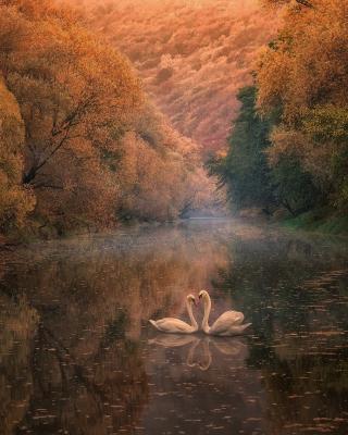 Swans on Autumn Lake - Obrázkek zdarma pro Nokia 5233