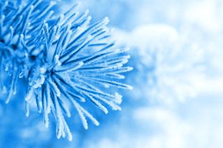 Macro Tree Freezing - Obrázkek zdarma pro 1600x1200