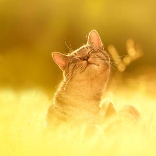 Happy Kitten - Obrázkek zdarma pro 208x208