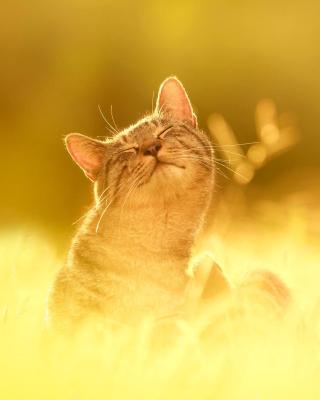 Happy Kitten - Obrázkek zdarma pro Nokia Asha 308