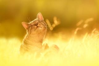 Happy Kitten - Obrázkek zdarma pro Fullscreen Desktop 800x600