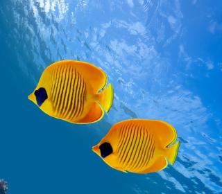 Tropical Golden Fish - Obrázkek zdarma pro 128x128