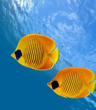Tropical Golden Fish - Obrázkek zdarma pro Nokia Asha 501