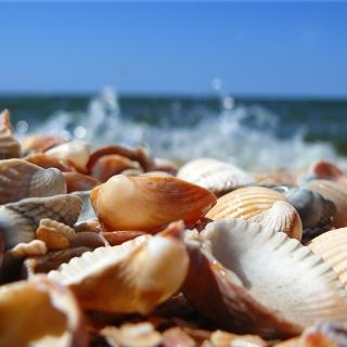 Seashells On Beach - Obrázkek zdarma pro 208x208