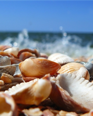 Seashells On Beach - Obrázkek zdarma pro 240x400